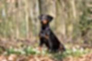 Webwaldröschen__DSC_0165.jpg