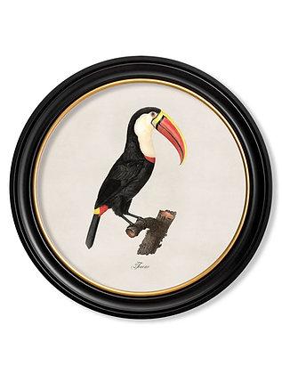 Large Toucan Round Art