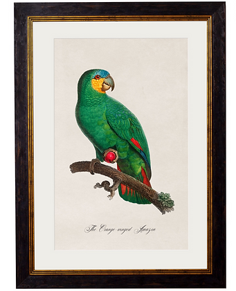 Orange Winged Parrot Rectangle Art