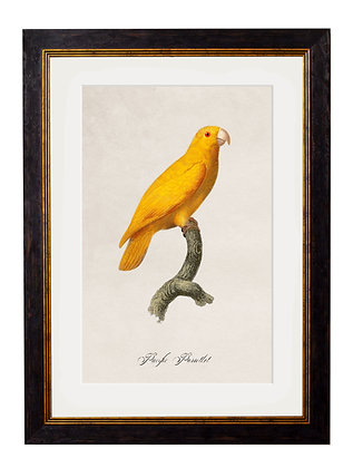 Pacific Flipped Parrot Rectangle Frame