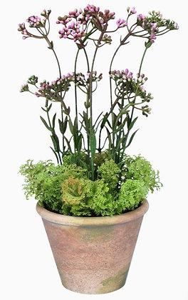Pre order Artificial Pink Wax Flower - in pot