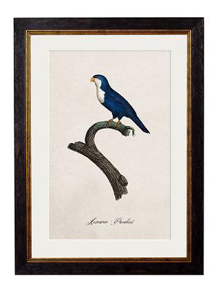 Arimanon Parakeet Rectangle Art