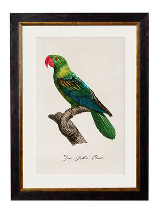 Great Billed Parrot Rectangle Art