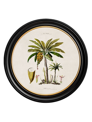 Large Round Art Banana Palm Tree