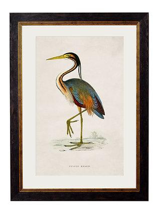Purple Heron Rectangle Black Framed Art