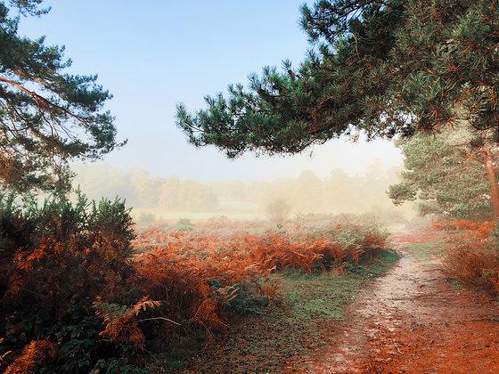 Reigate Heath Misty Autumn by Jenny Frear
