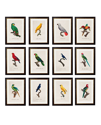 Parrot Collection