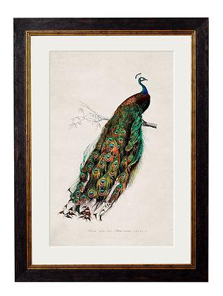 Peacock Rectangle Black Framed Art
