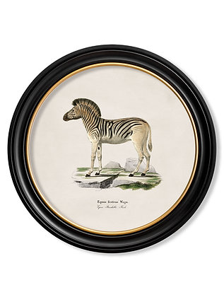 Medium Round Art Zebra