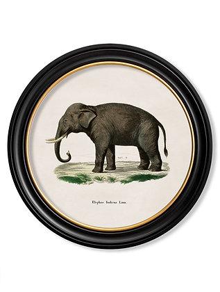 Small Round Art Elephant