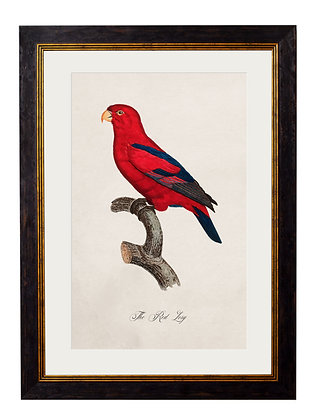 Red Lory Parrot Rectangle Art