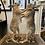 Thumbnail: Taxidermy Boxing Hares