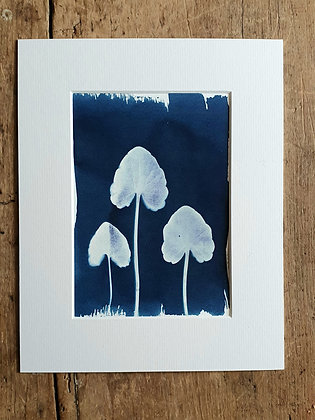 Buttercup Leaf Original Cyanotype Print by She Makes