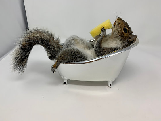 Taxidermy Squirrel Having A Bath