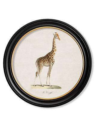 Medium Round Art Giraffe