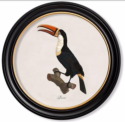 Medium Toucan Round Art