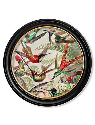 Medium Hummingbirds Round Art