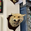 Thumbnail: Taxidermy Fox Head