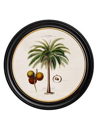Large Macaw Palm Round Art