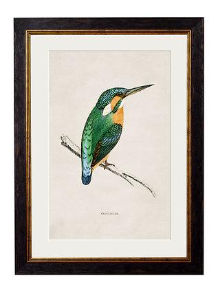 Kingfisher Rectangle Black Art