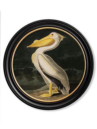 Medium Round Art American White Pelican