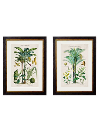 Tropical Plants Used As Food And Clothing