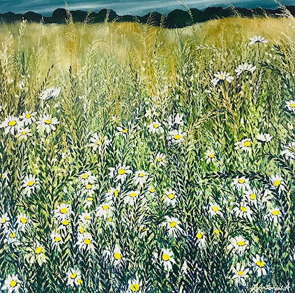 Giant Wild Daisies by Amie Antoniak