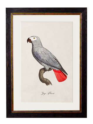 African Grey Parrot Rectangle Art