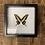 Thumbnail: Taxidermy Black and Yellow Framed Butterfly