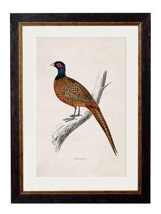 Pheasant Rectangle Black Framed Art