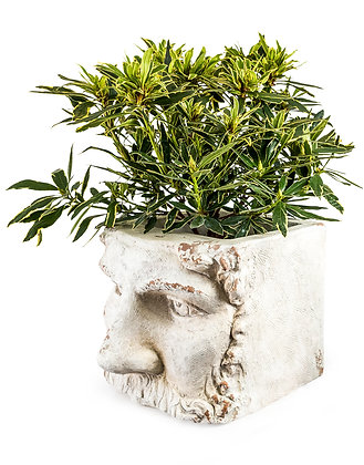 LARGE RUSTIC STONE EFFECT CLASSICAL FACE PLANTER