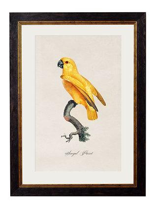 Senegal Parrot Rectangle Art