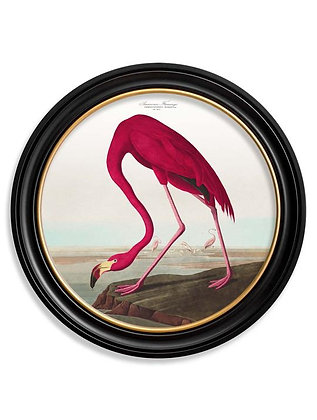 Medium - American Flamingo  Frame