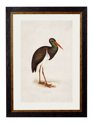 Black Stork Rectangle Framed Art