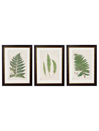 Botanical Fern Set of 3 Rectangle Art