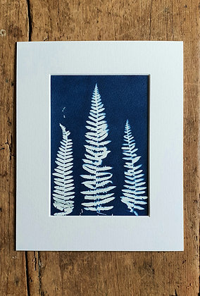 Ferns Original Cyanotype Print by She Makes