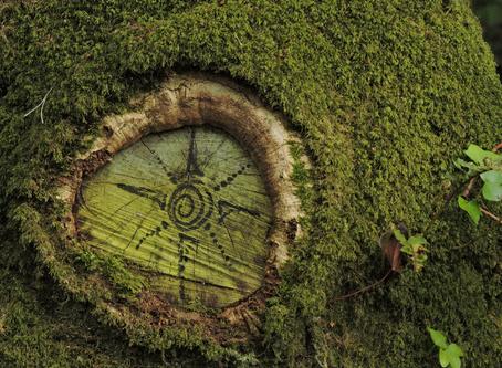La forêt àL'Hôtié de Brocéliande...