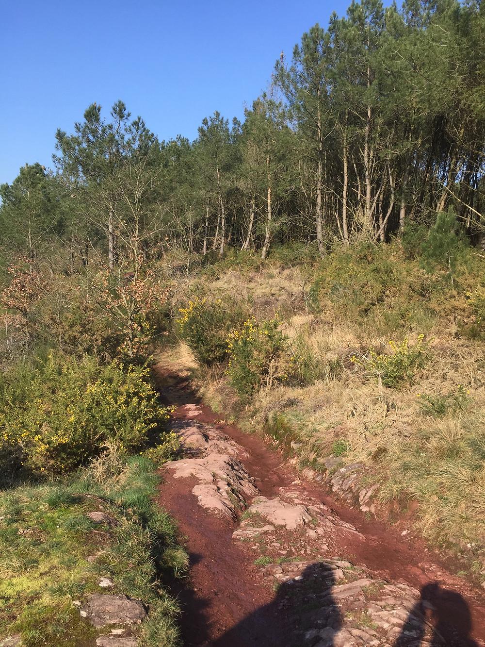Randonnée dans la forêt de Brocéliande