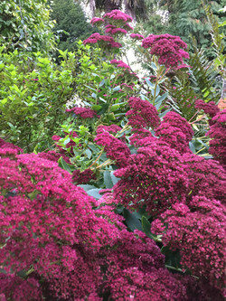 L'Hôtié de Brocéliande en fleur