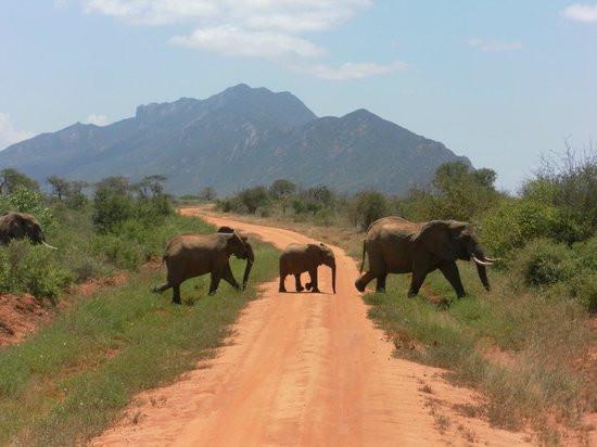 natural-world-kenya-safaris.jpg