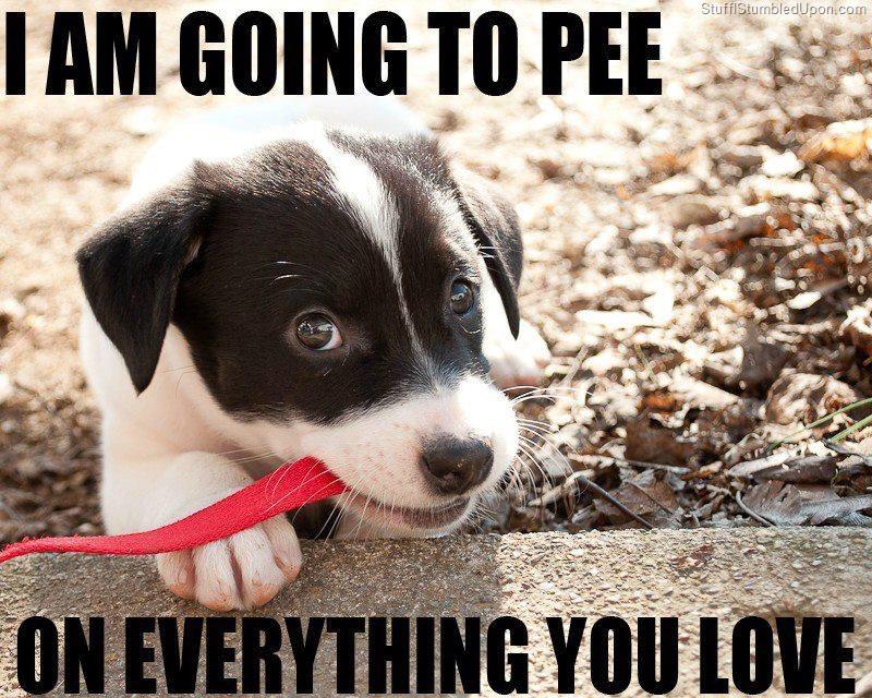 Potty Training Puppy