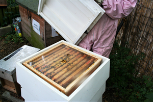 Opening a bee hive in Coram's Fields London