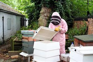 Luke Dixon Beekeeper opens a bee hive in Coram's Fields London