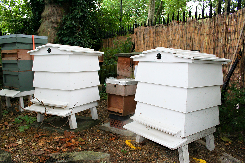 Two bee hives in Coram's Fields London