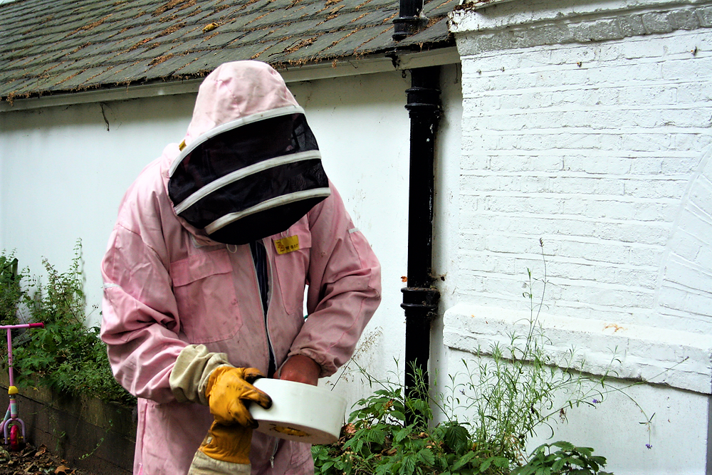 Cleaning a bee hive in Coram's Fields London