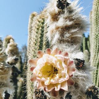 Ganna Walska Lotusland - Botanic Garden, California, US
