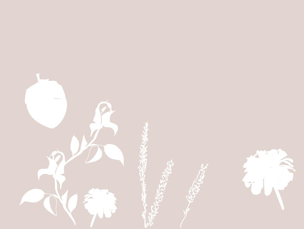 Stplants background.png