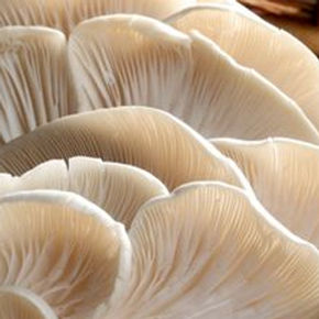 mushrooms4.jpg
