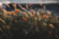 flowerwindstorm.jpg