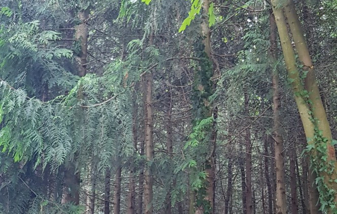 Trinity Trail (141).jpg